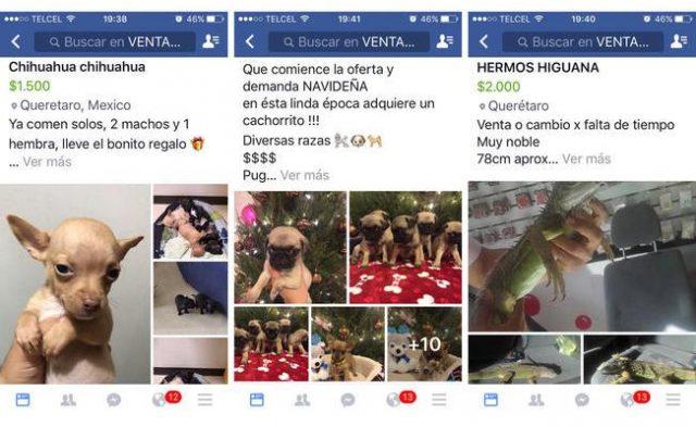 Facebook e Instagram prohíben la venta de animales