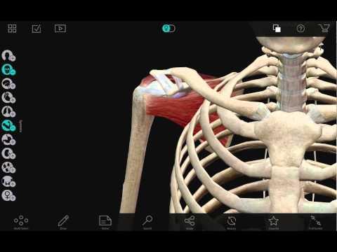 Las mejores aplicaciones de 2018, según Google Play Anatomía