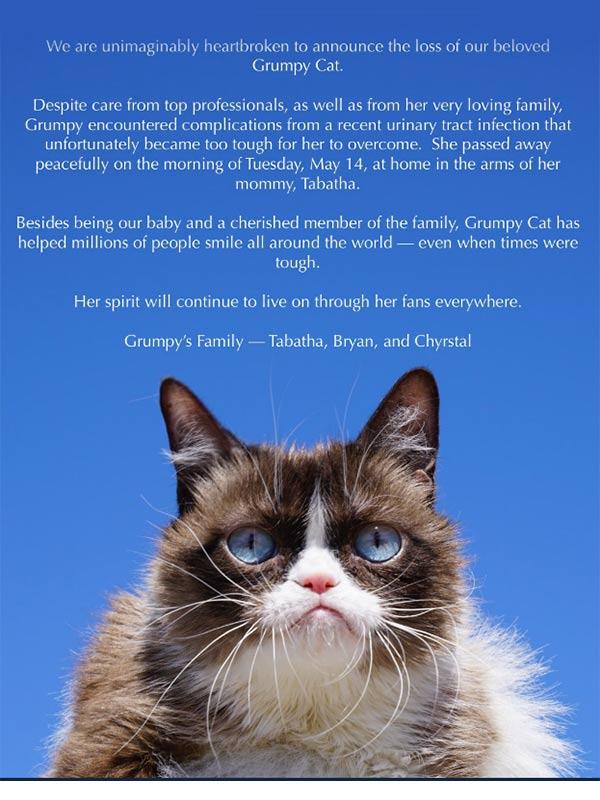 Murió Grumpy Cat, la gatita más famosa de internet