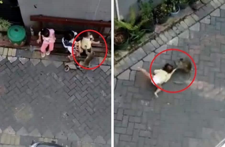 Video viral de mono en moto que se roba a niña; lo que realmente pasó